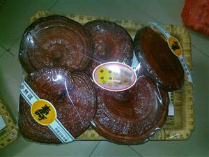 nấm linh chi khay đỏ Hàn Quốc